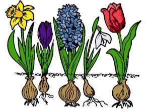 5-bloembollen-narcis-hyacint-sneeuwklokje-tulp